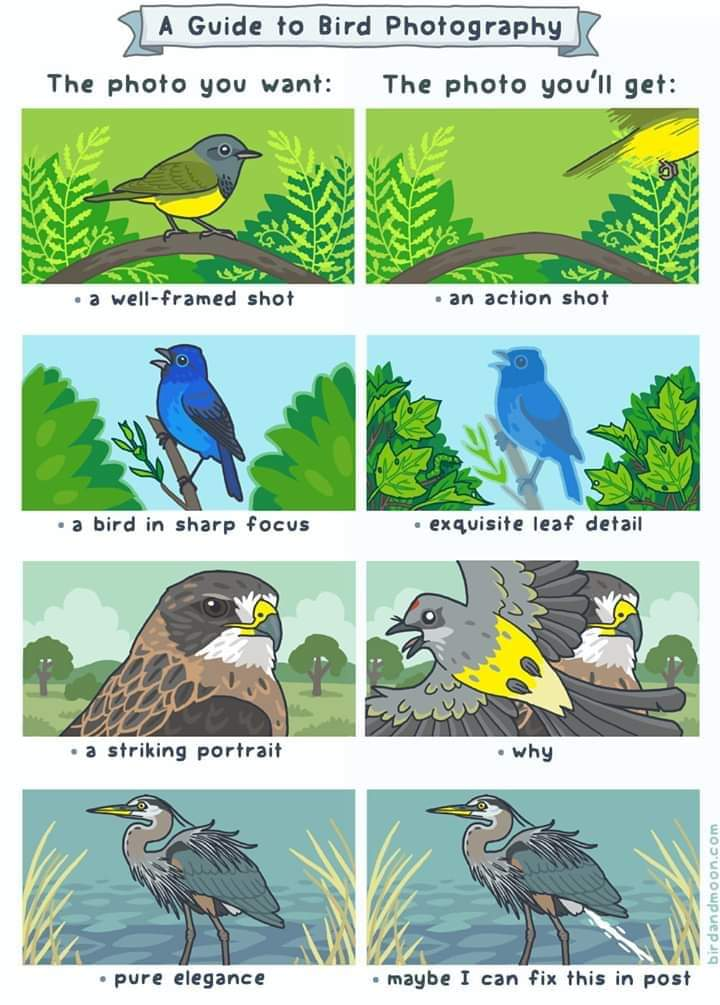 A Guide to Bird Photography